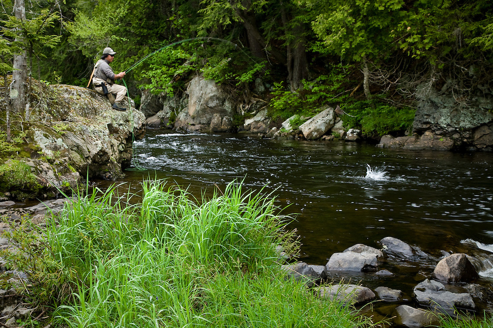 Angler playing a fly caught fish on the West Branch of the Ausable River in the Adirondacks of New York.