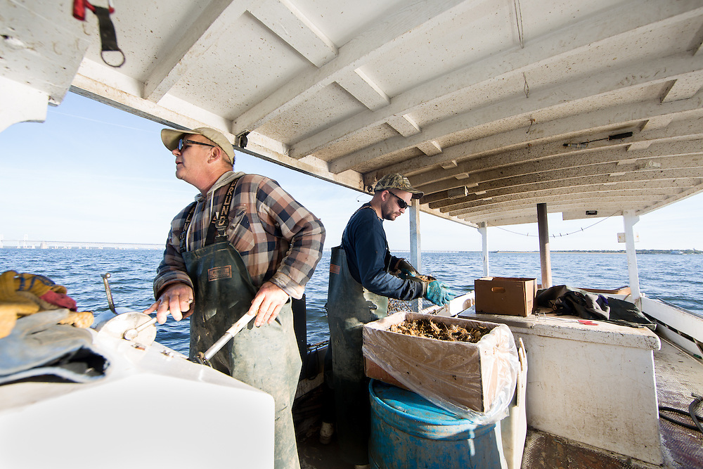 Ryan Ribb adds more food to the crab trap before throwing it back in the water, while Captain Richard guides the boat to the next buoy. | October 11, 2015