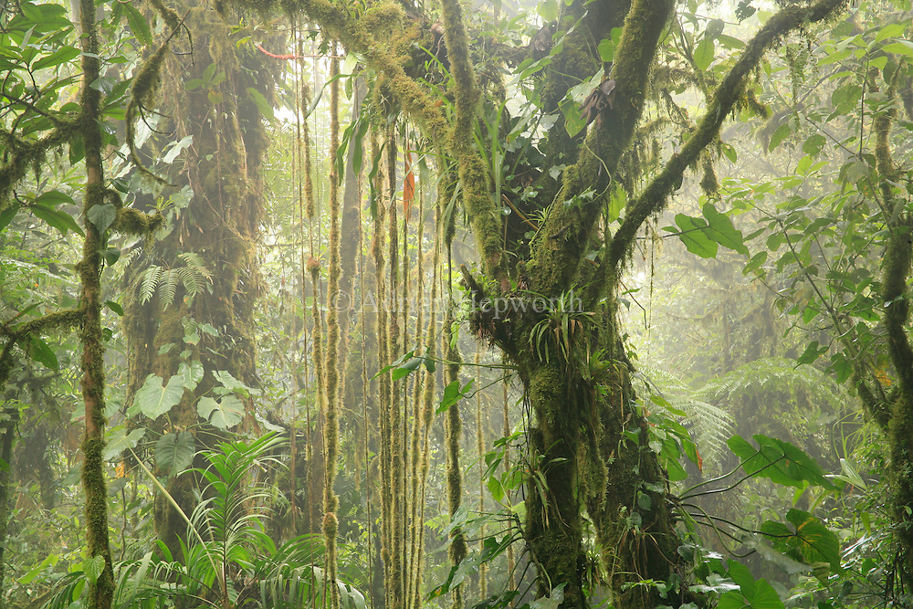 Monteverde Cloud Forest Preserve, Costa Rica.<br />