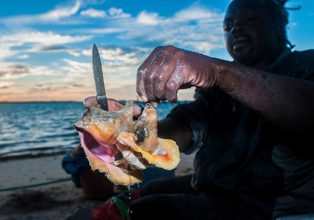 A Bahamian restaurateur unshells a conch in preparation for conch salad - a local delicacy.