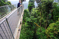 The Mamu Canopy Cantilever extends out over the rainforest for a bird's eye view of the surrounding area. The Atherton Tablelands, far north Queensland, Australia