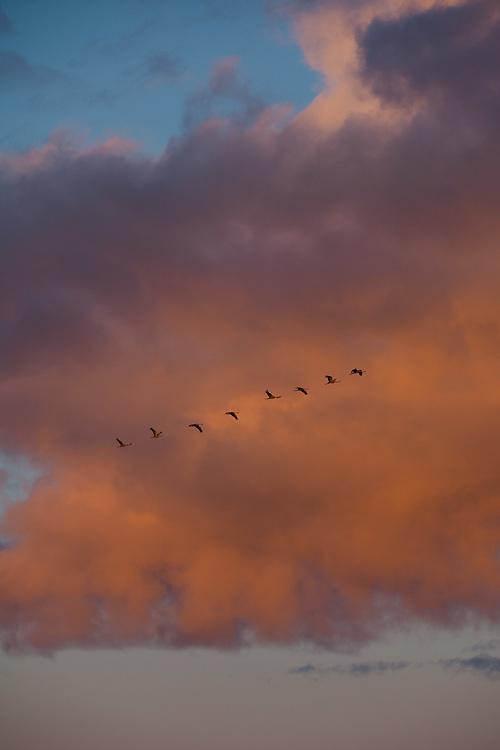 Crane watching in Pogari-Sassi coastal meadow, Western Estonia
