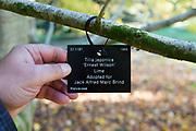 Tree species identification label, National arboretum, Westonbirt arboretum, Gloucestershire, England, UK - Tilia Japonica lime