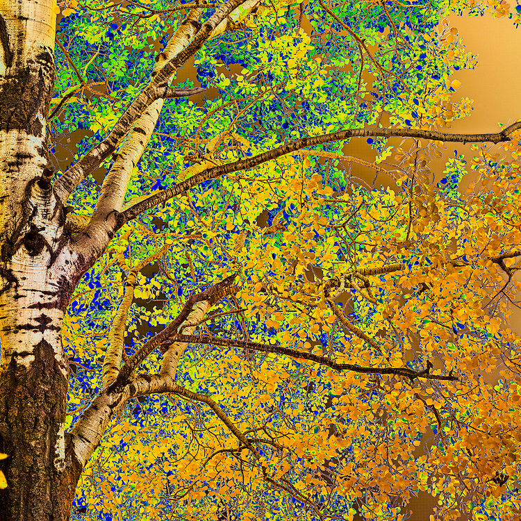 Aspen Abstract (diptych, bottom)