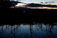 Dopo un violento acquazzone si è ristagnata l'acqua in questo vigneto ed ha creato una bellissima luce durante il tramonto
