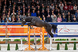208, Mr Untouchable<br /> KWPN hengstenkeuring - 's Hertogenbosch 2020<br /> © Hippo Foto - Dirk Caremans<br />  29/01/2020