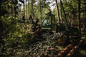 Bialowieza forest logging
