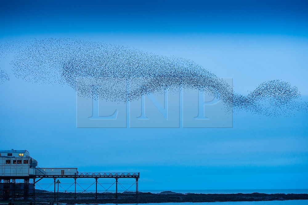 © London News Pictures. 26/11/2015/ Aberystwyth. UK. A huge flock of starlings perform spectacular displays in the air above Aberystwyth on the west Wales coast<br /> Each evening between October and March tens of thousands of the birds fly in huge 'murmurations; in the sky above the town before settling to roost for the night on the cast iron legs of the Victorian seaside pier.  Aberystwyth is one of only a handful of urban starling roosts in the UK. Photo credit: Keith Morris/LNP
