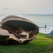A massive brass sculpture of a conch shell adorns a billionairs lawn overlooking shallow seagrass beds and sand flats that living conch call home.