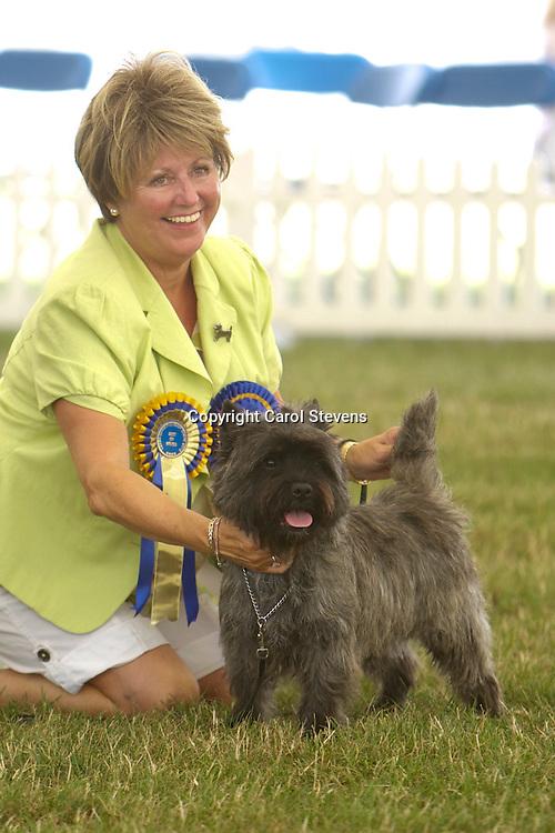 Ch Cloverbrook Codebreaker<br /> Mrs S Braybrook<br /> Cairn Terrier