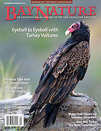 Cover shot for Bay Nature Magazine, October 2014.  Image was taken of a turkey vulture in soft, pre-dawn light.