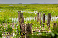 Coastal Salt Marshes
