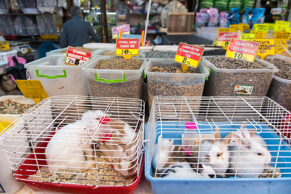 Wired cages containing rabbits for sale at outdoor marketplace, Istanbul, Turkey.