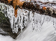 Icicles freeze over a splashing stream in Cougar Mountain Regional Wildland Park, Washington, USA.