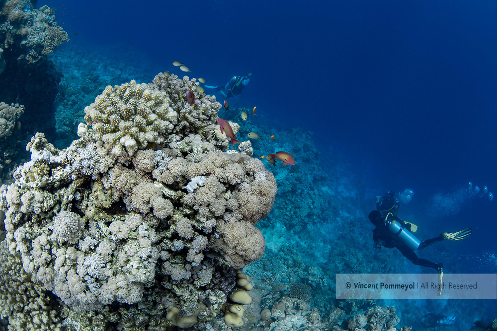 Reef and coral,  Red Sea, Sudan.