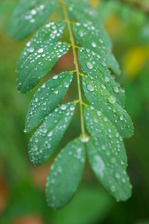 Fall season plant closeups, leaves