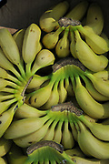 A pile of fresh ripe Bananas in the market