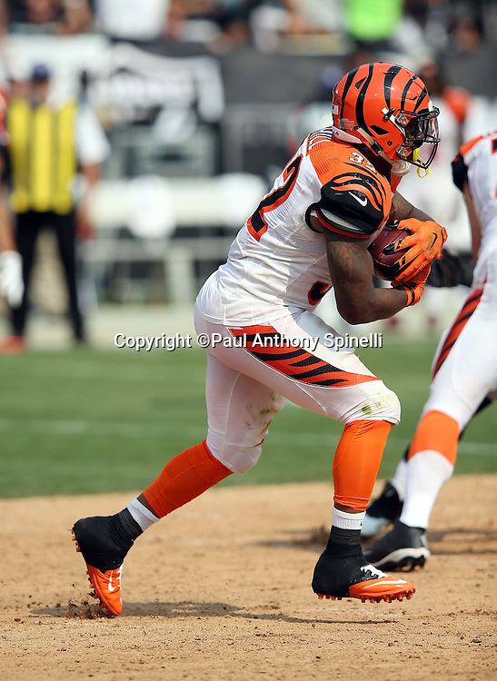 Cincinnati Bengals running back Jeremy Hill (32) runs the ball in the third quarter during the 2015 NFL week 1 regular season football game against the Oakland Raiders on Sunday, Sept. 13, 2015 in Oakland, Calif. The Bengals won the game 33-13. (©Paul Anthony Spinelli)