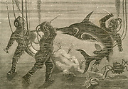 'Divers exploring the sea floor attacked by a Swordfish. Engraving, c1890.'