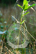 Spider in web, vertical with soft focus filter