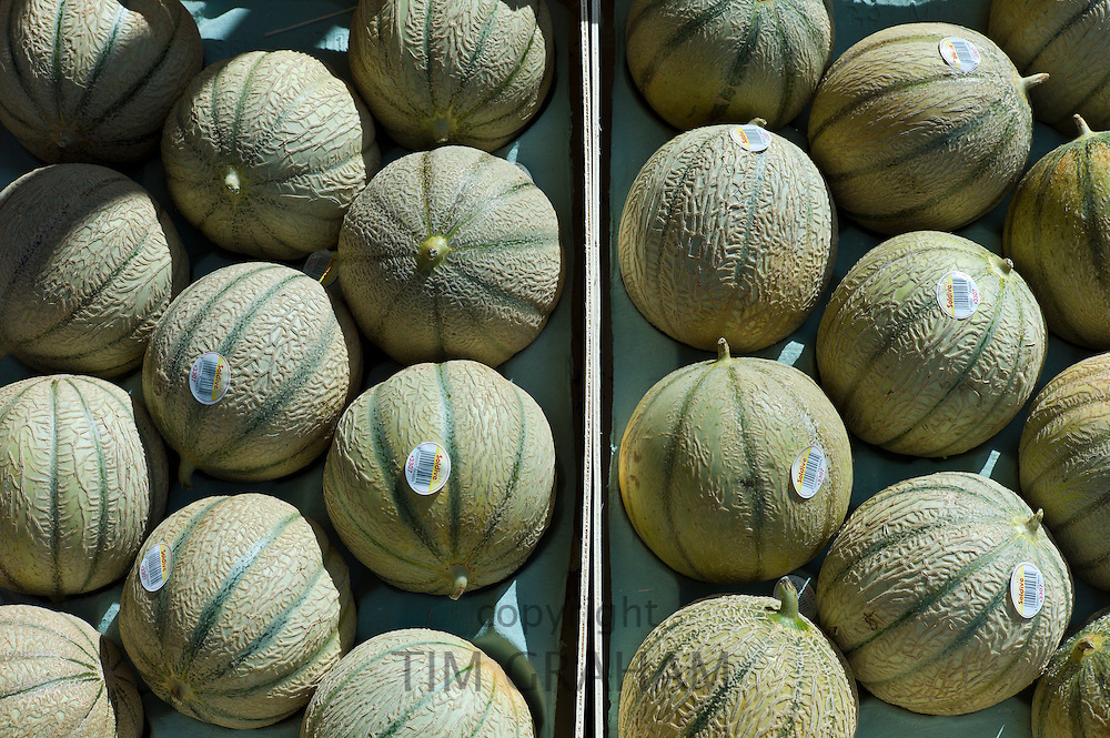 French Charentais melons on sale at food market at La Reole in Bordeaux region of France