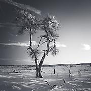 Solitary in desert Gallery