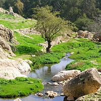 Wilderness of Judah-Wadi Qilt