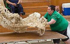 Christchurch-Canterbury A & P show, wool handling