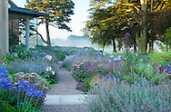 Gravel path, agapanthus, salvia, Sedum telephium 'Matrona', Verbena hastata f. rosea, contemporary 'garden room' extension