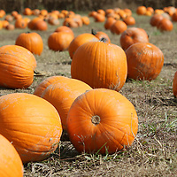 The Tupelo Buffalo Park has a pumpkin patch set up until October 31st