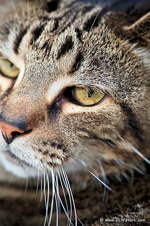 A close-up of our pet cat, Moe.