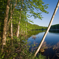A paper birch tree leans over Boulter Pond at Highland Farm in York, Maine.