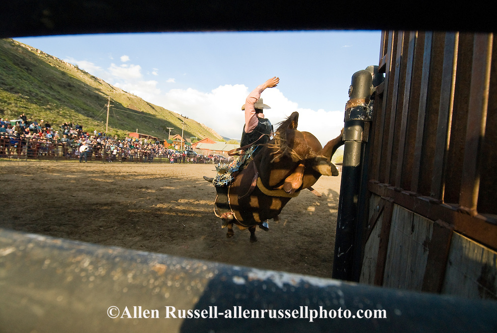 Bull Rider comes out of chute, Gardiner, Montana Rodeo