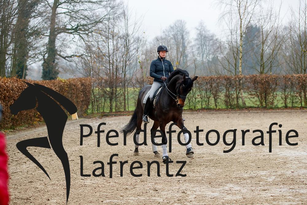 GALOPPTRAINING  Ann-Christin WIENKAMP <br /> Lengerich - Galopparbeit 2017<br /> © www.sportfotos-lafrentz.de / Stefan Lafrentz