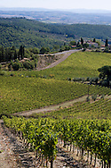 A view over vineyards in Chianti, Italy