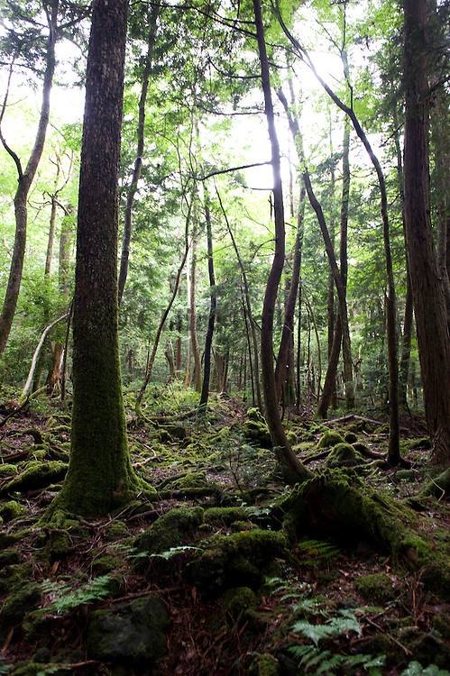 Akiohagara forest, know as the place where many japanese come to commit suicide. Around 3000 japonese kill themselves here each year.