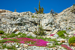 """Wildflowers in the Tahoe Back Country 1"" - Photograph of some bright wildflowers in the Tahoe area back country, somewhat near Jackson Meadows."