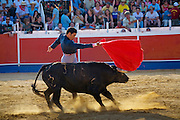 Professional bullfighter Oscar Higares' first bull of the day roars by him not long after charging out of the gate on a stifling midsummer day in Campos del Rio, near Murcia in southern Spain.   (From the book What I Eat: Around the World in 80 Diets). MODEL RELEASED.