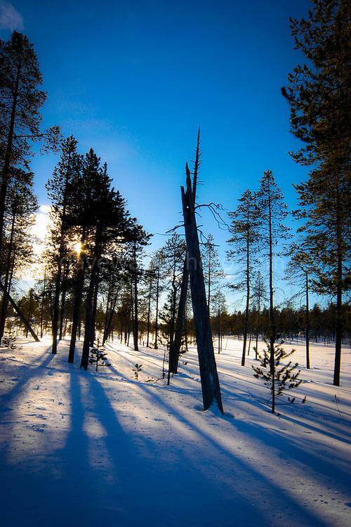 Afernoon winter shadows fall near Inari, Lapland, Finland.