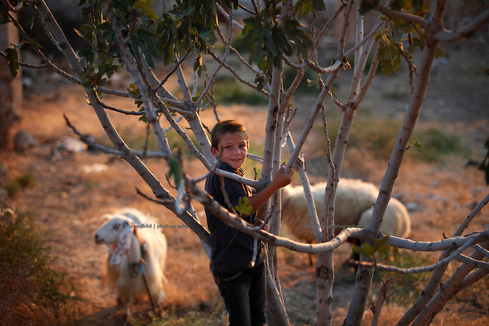A boy climbs a bush on dryed out soil where some sheeps graze around.<br />