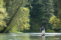Fly fishing for steelhead along the Oregon coast.