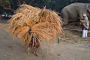 A young girl is carrying as much hay as she can hold during the yearly Sonepur Mela, Asia's largest cattle market, in Bihar, India.