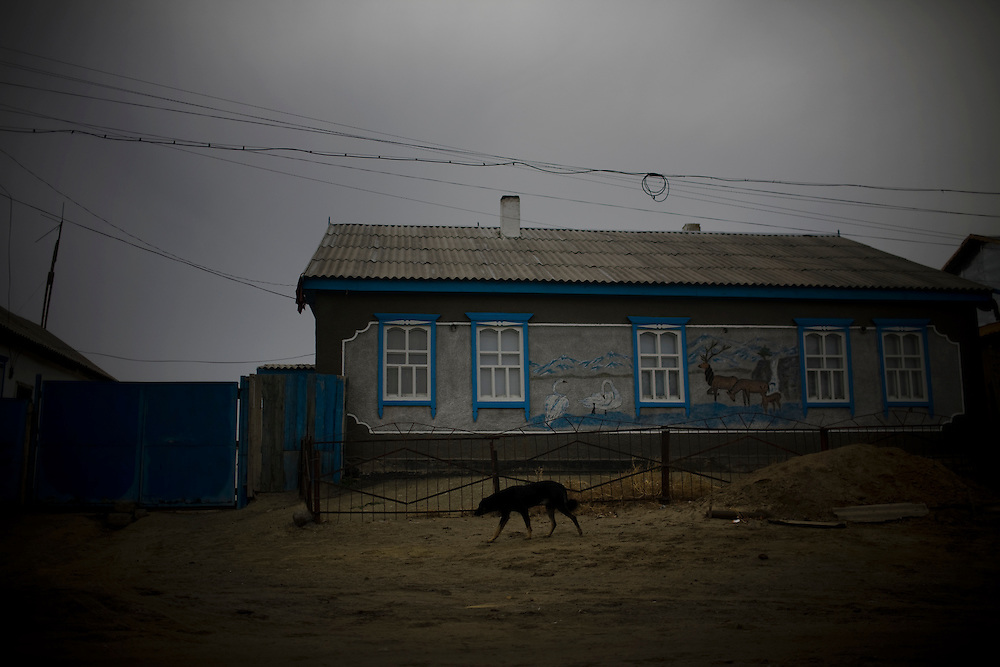 CREDIT: DOMINIC BRACCO II..SLUG:PRJ/KAZAKHSTAN..DATE:11/4/2009..CAPTION:A dog runs in Aralsk, Kazakhstan on November 4, 2009. According to locals the city was much greener when the sea was at its port. ..Aral Sea Overview: ..During the 1960s the USSR began irrigating the waters of the Aral Sea in southern Kazakhstan to combat their growing food crisis. The Soviets severely miscalculated and water began receding quickly from the port cities. The waters continued to recede. By 2000 the water was 80 km away from the city of Aralsk, a main seaport in Kazakhstan. In 2005 with help from the World Bank, construction began on a 13km dike that locals hoped would bring the waters back to their original shores. The project raised water quality and fishing was able to resume, however four years after completion of the dike the water is still 50km from Aralsk's port. Locals seem mixed on the possibility of the sea returning after more than 40 years without the sea. Fishermen from Aralsk make a three-hour path through soft desert road along the former seabed. The only source of income for many is cattle, horses, and camels, which have, began to overgraze the areas of the former seabed and surrounding desert. Because of this nutrient rich topsoil is lifted by the wind and the process of desertification continues.  .