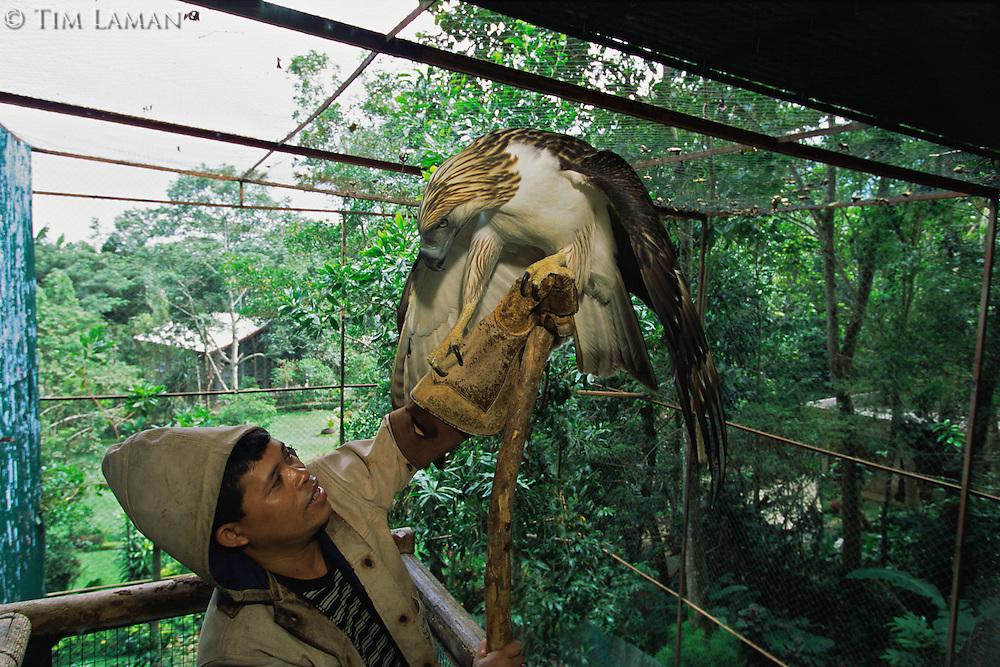 At the Philippine Eagle Captive Breeding Program keeper Eddie Juntilla trains a male eagle to deliver sperm samples..Mindanao Island, Philippines.  Nov 01.