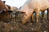 Food - Animals Feeding