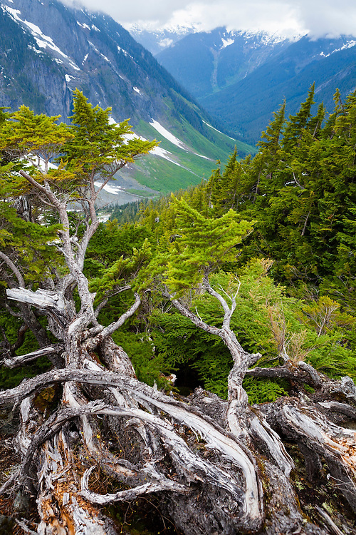 View down the North Fork Cascade River valley from Cascade Pass, North Cascades National Park, Washington.