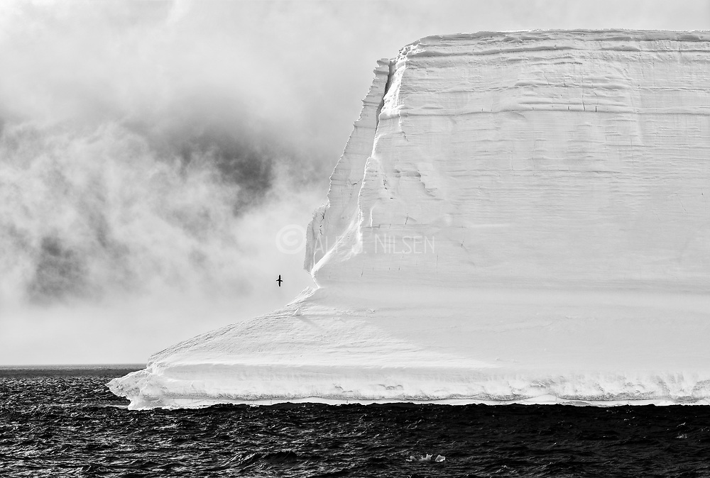 Giant iceberg and a lonely Petrel in the Antarctic Sound, northern Antarctic Peninsula
