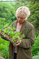 Carol Klein holding tray of Geranium wallichianum 'Buxton's Blue'. Grown on with cardboard sections