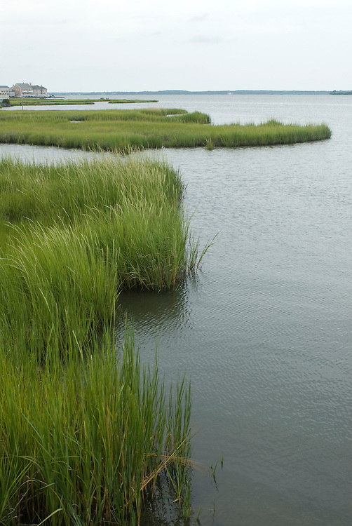wetlands of assawoman bay