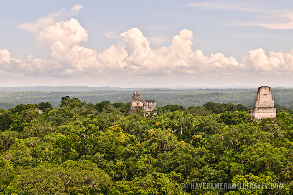 View of the Tikal Maya Ruins and the jungle canopy from the top of Temple IV, the tallest of several pyramids at the site. At very left of frame can be seen a small part of the Northern Acropolis, then, from left to right, one can see the tops of the Temple 1 (Temple of the great Jaguar), Temple 2 (Temple of the Masks), and Temple 3 (Temple of the Jaguar Priest). From this vantage point, one can watch and hear howler monkeys, spider monkeys, and many birds moving through the treetops.